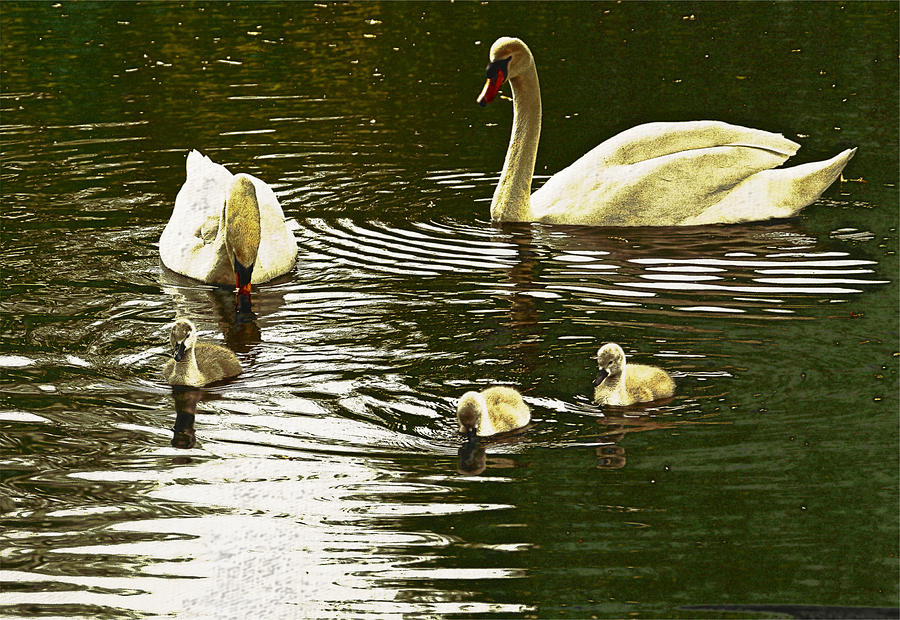 Animal Photograph - Family Day Out  by Andrew Hunter