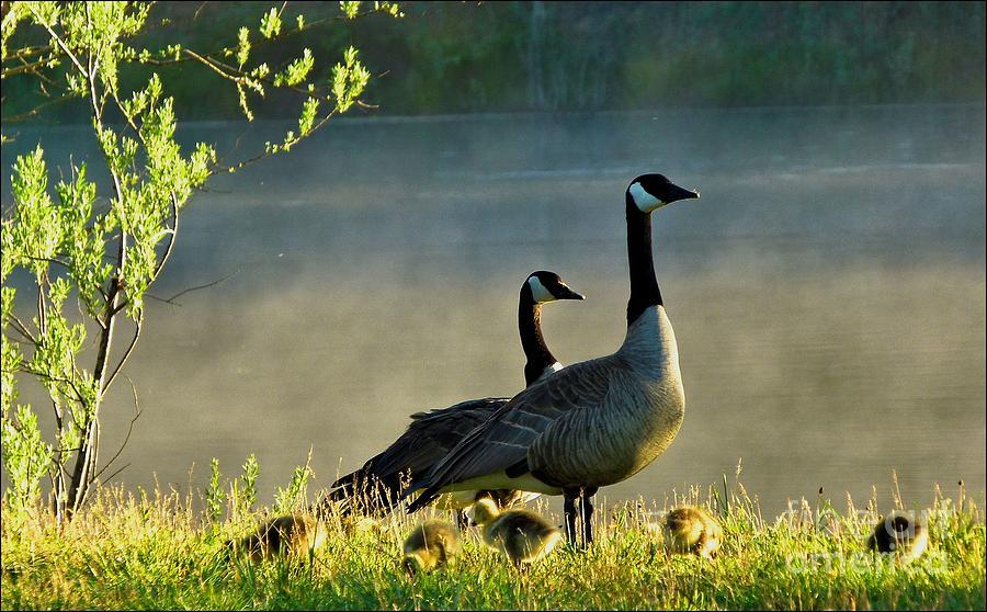 Family Gathering by Julia Hassett