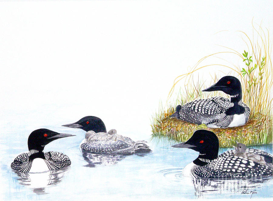 Ducks Painting - Family Of Loons by Pauline Ross
