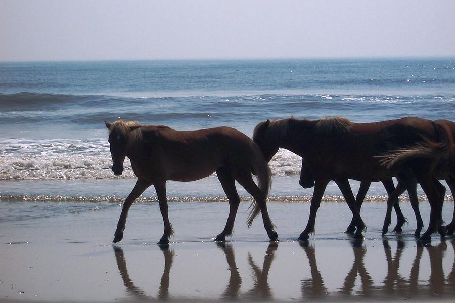 Horses Photograph - Family Stroll by James and Vickie Rankin
