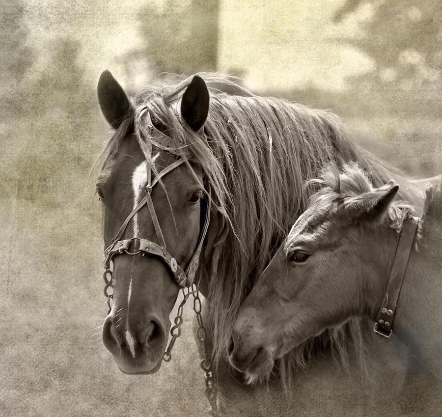 Animal Photograph - Family Ties by Evelina Kremsdorf