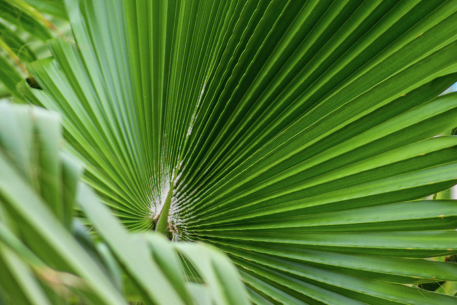 Fan Palm View 4 by James Gay