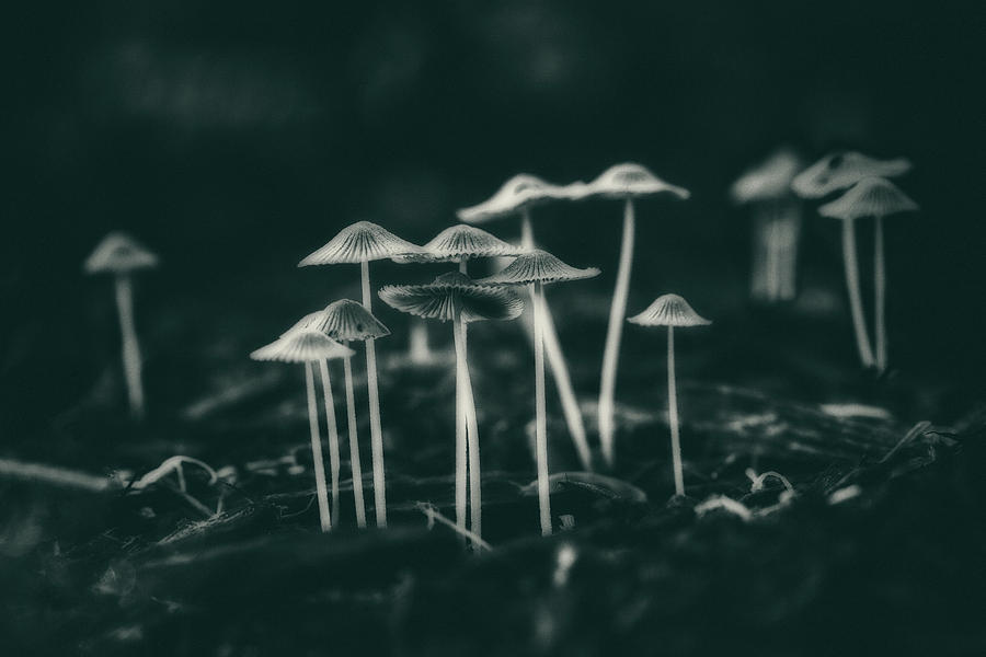 Fungus Photograph - Fanciful Fungus by Tom Mc Nemar