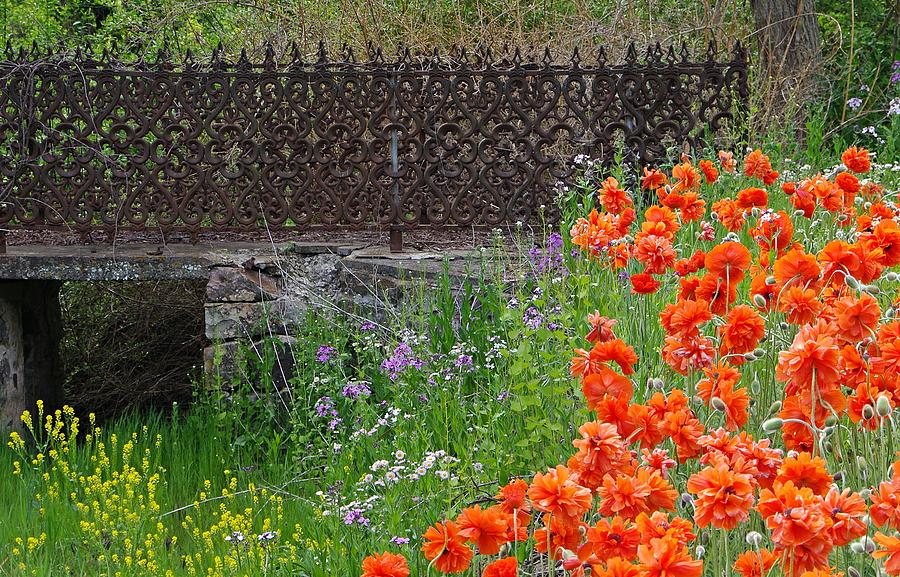 Fancy Bridge Photograph - Fancy Foot Bridge And Poppies by Stephanie Calhoun