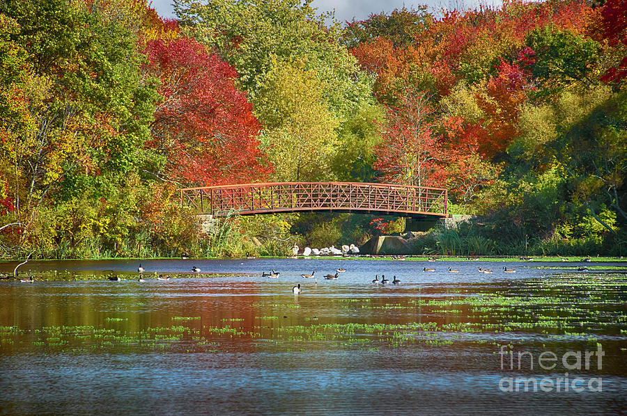 Lake Photograph - Fantasy Foliage by Judy Hall-Folde