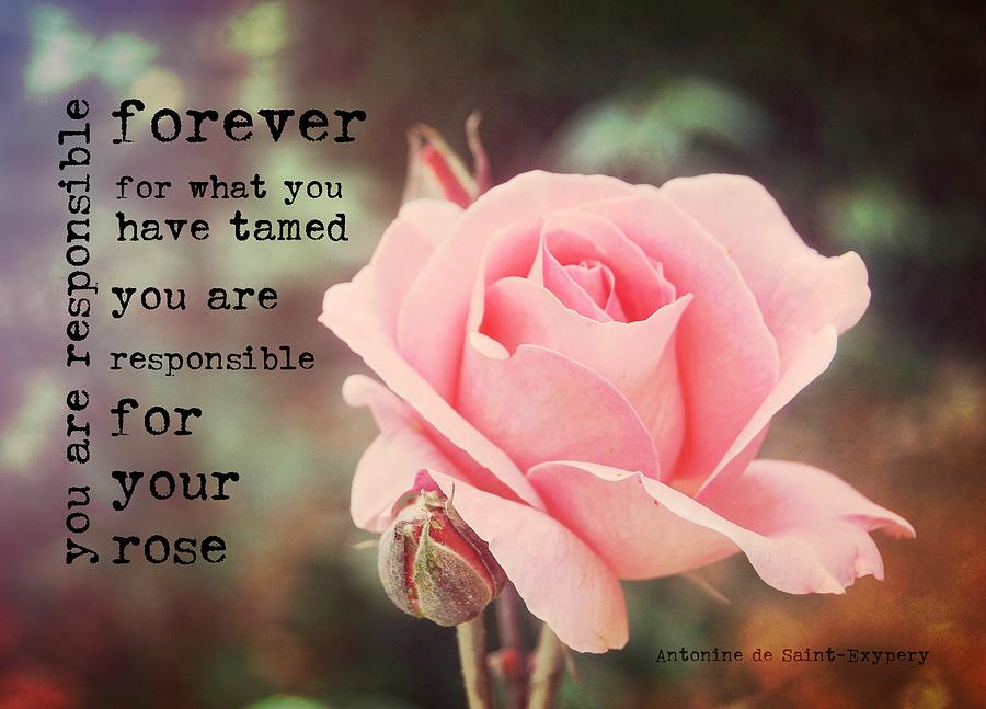 Rose Photograph - Fantin-latour Roses Quote by JAMART Photography