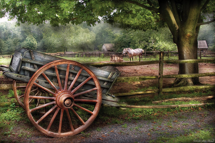 Savad Photograph - Farm - Horse - Grey Mare by Mike Savad