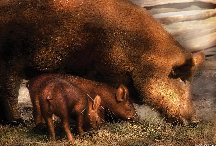 Savad Photograph - Farm - Pig - Family Bonds by Mike Savad