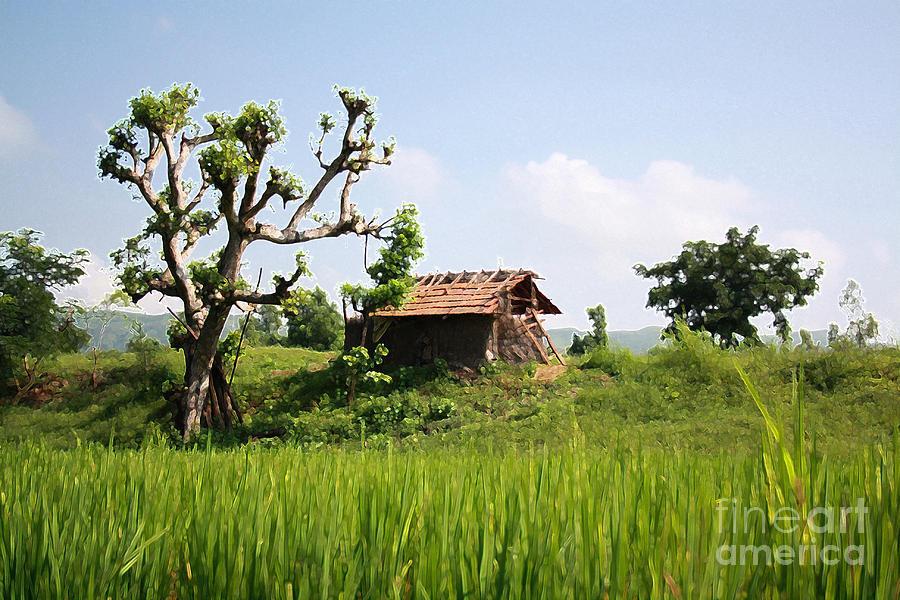 Farm And A Hut Photograph by Bhavesh Chhatbar
