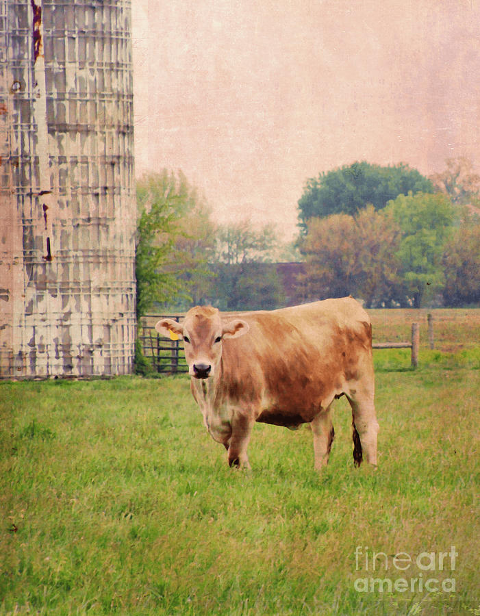 Jersey Cow Digital Art - Farm Dreamscape by Ilona Erwin