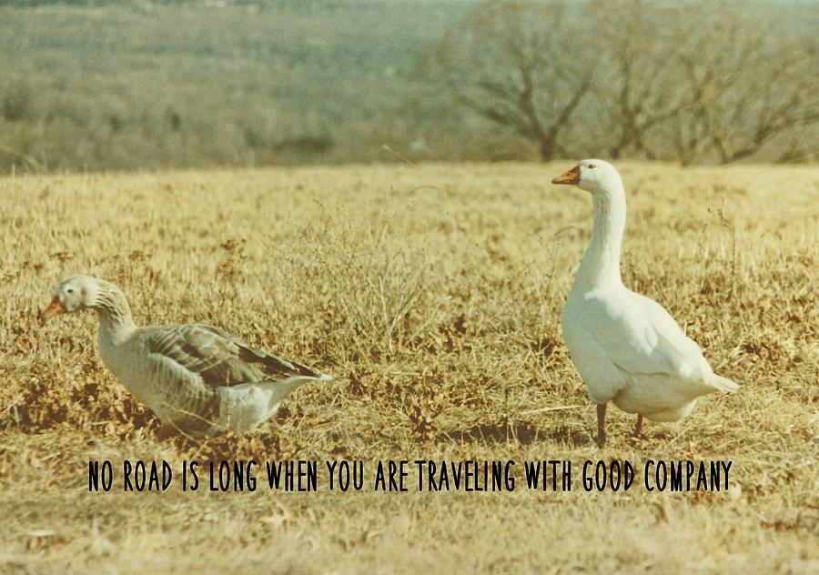 Goose Photograph - Farm Geese Quote by JAMART Photography