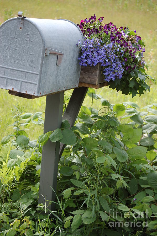 Countryside Photograph - Farms Mailbox by Frank Stallone
