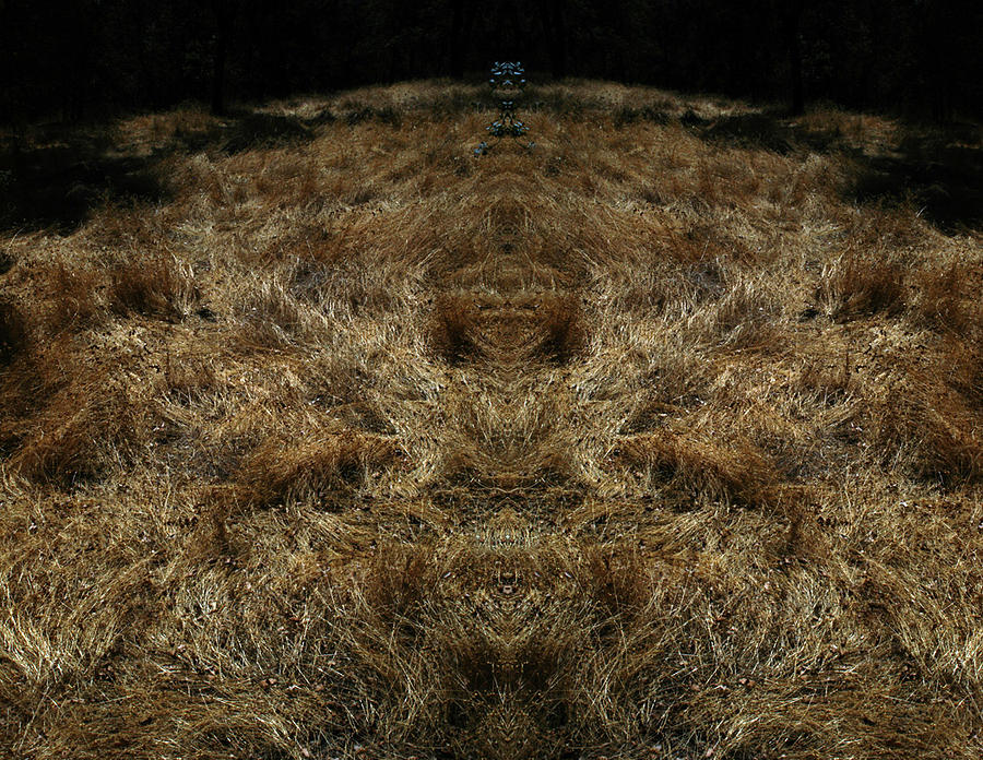 Grass Photograph - FarView 2 by A paul Cartier