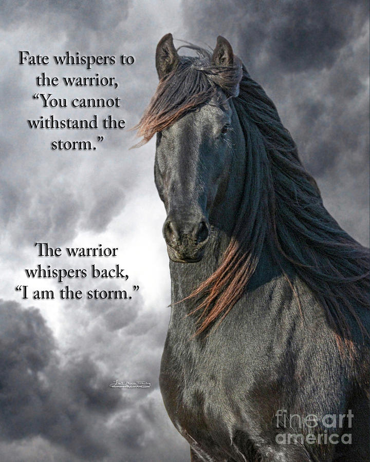 Friesian Photograph - Fate Whispers by Lori Ann  Thwing