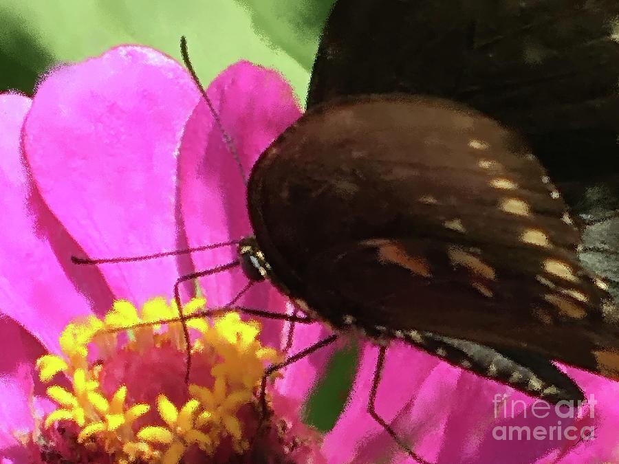 Black Swallowtail Butterfly Photograph - Favorite Dive by Anita Faye
