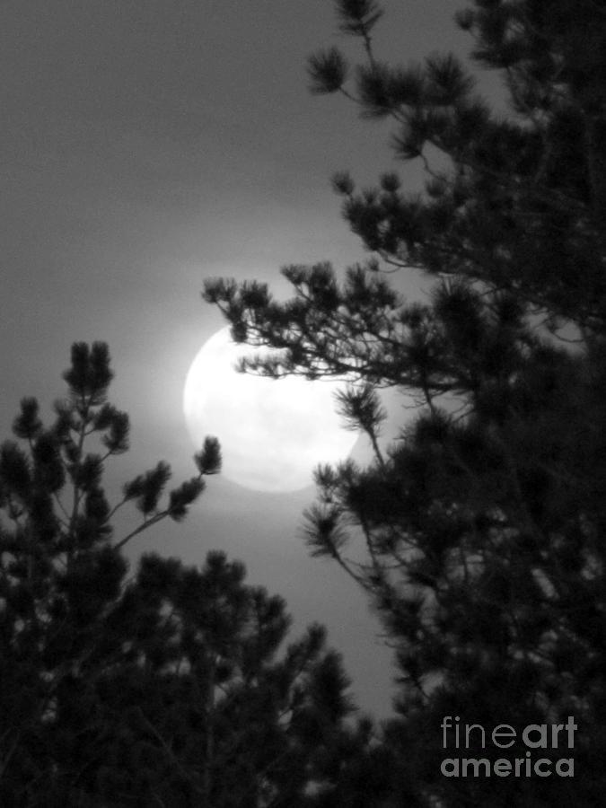 Favorite Full Moon Photograph