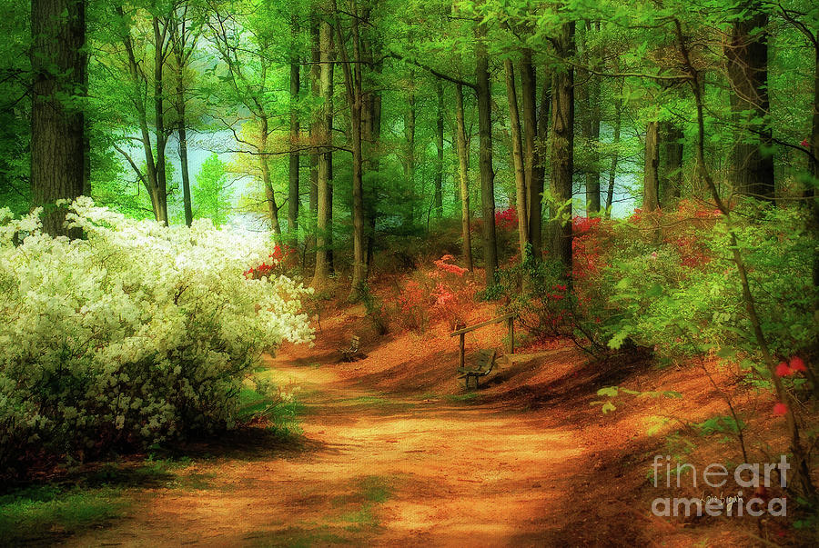Landscape Photograph - Favorite Path by Lois Bryan