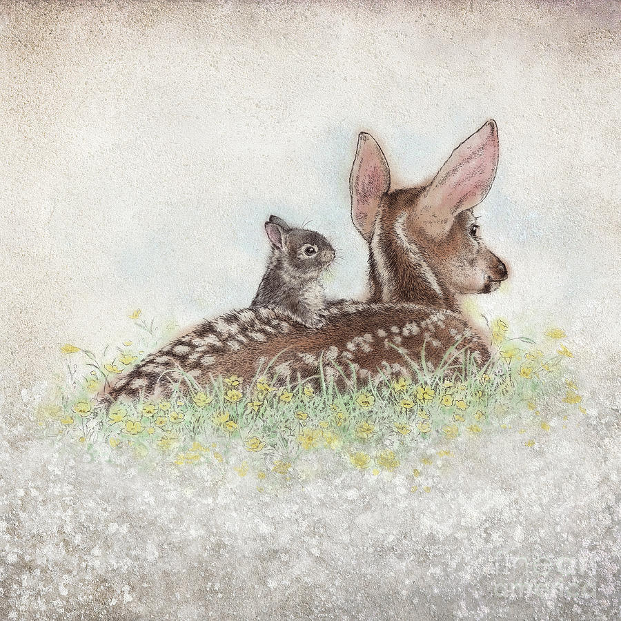 Deer Drawing - Fawn And Bunny by Laurie Musser