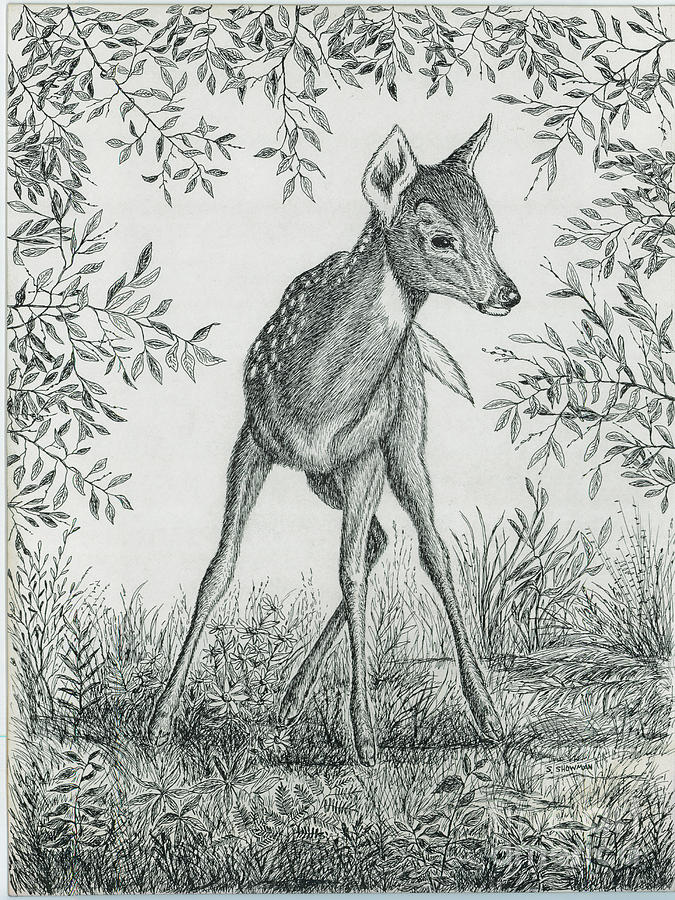 Fawn Painting - Fawn In Clearing by Samuel Showman