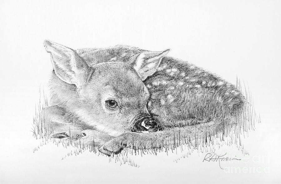 deer drawing fawn in the grass by roy anthony kaelin