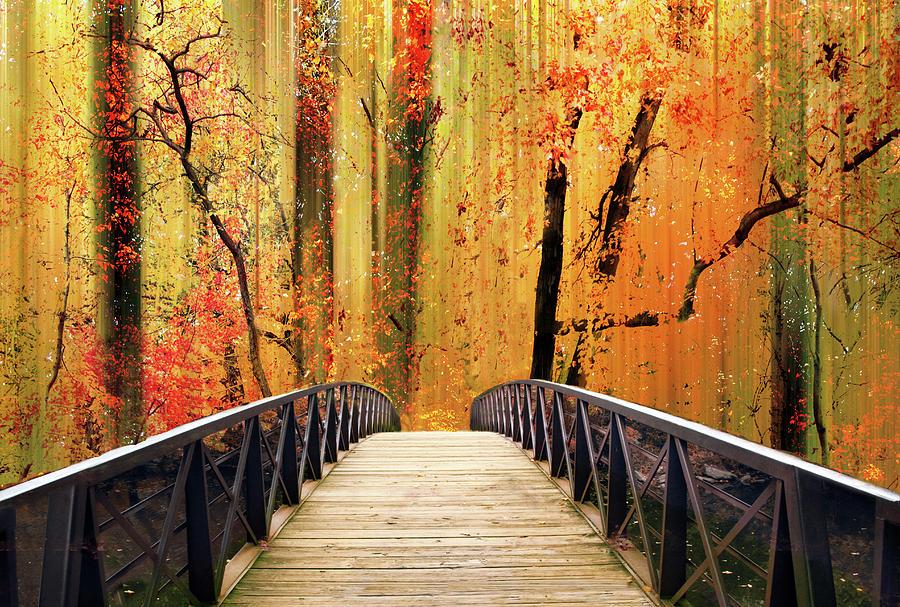 Footbridge Photograph - Forest Fantasia by Jessica Jenney
