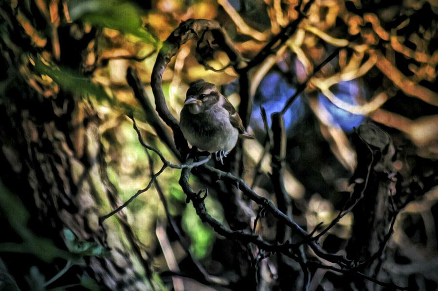 Birds Photograph - Fear Not by Shelley Smith