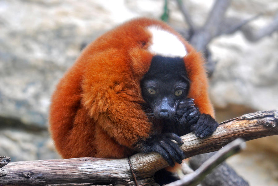 Animal Photograph - Fearful by Teresa Blanton