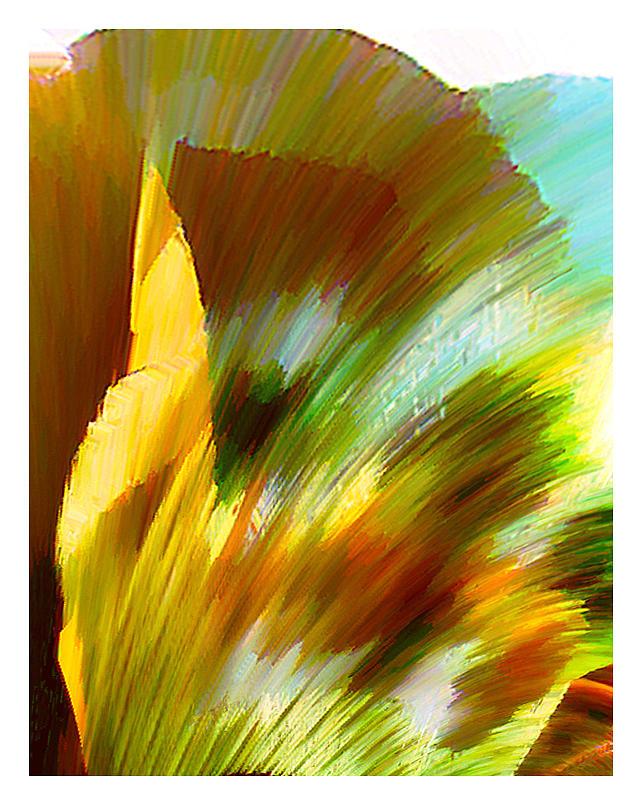 Feather Digital Art by Anil Nene