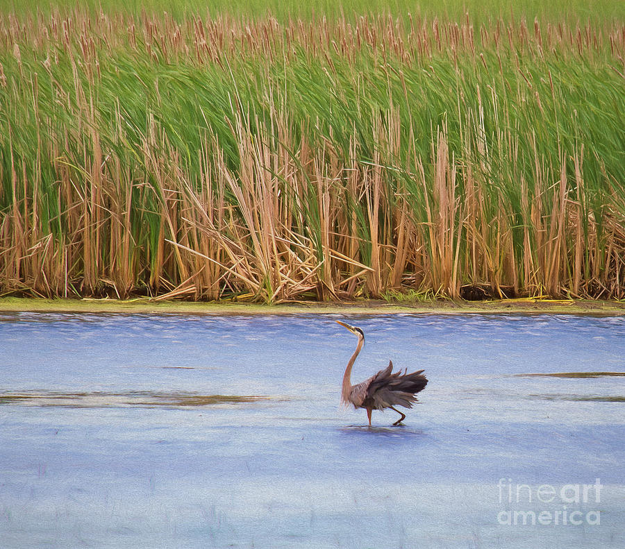 Wildlife Photograph - Feather Dance by Kathleen Rinker