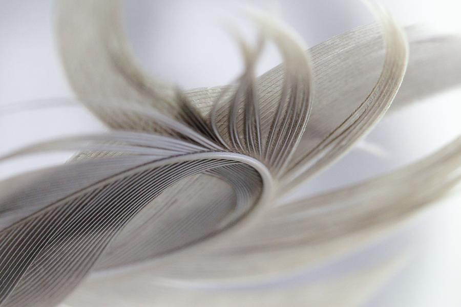 Feather In The Wind Photograph