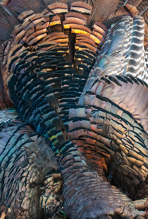 Feather Mosaic Photograph