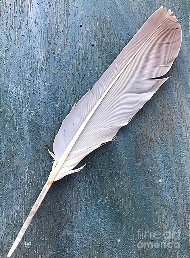 Nature Photograph - Feather Of A Dove by Leona Atkinson