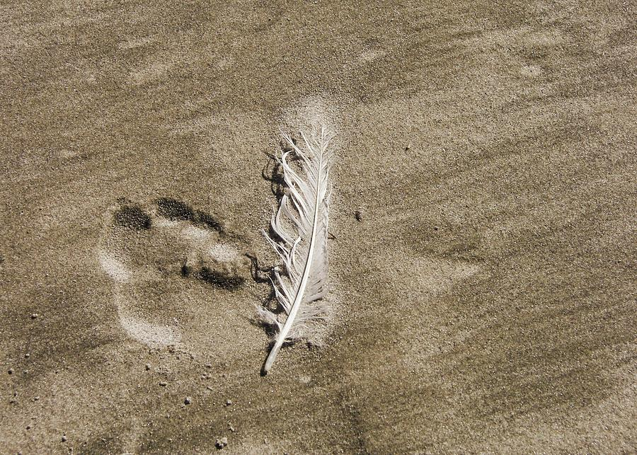 Feather Photograph - Feather Print by JAMART Photography