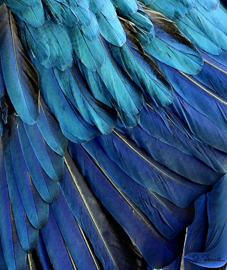 Feather Photograph - Feathered by Joe Bonita