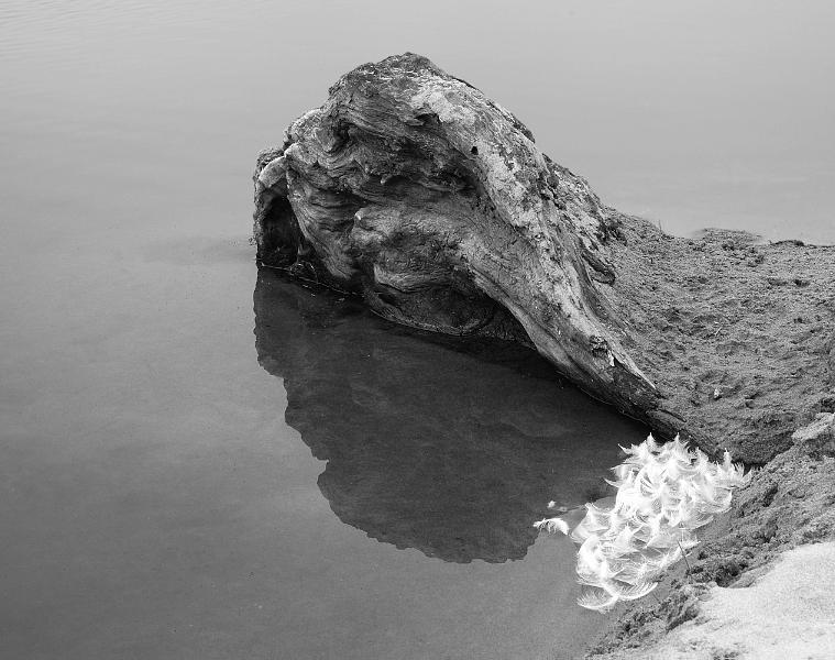 Landscape Photograph - Feathers Kehoe Beach by Paul Aiello