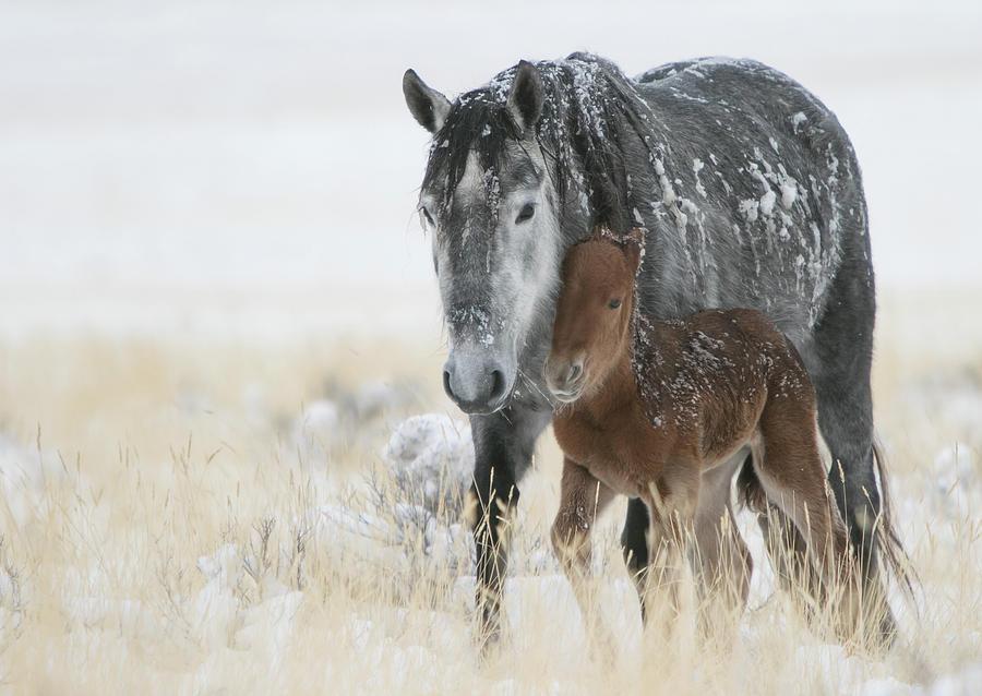Horse Photograph - February Colt by Kent Keller
