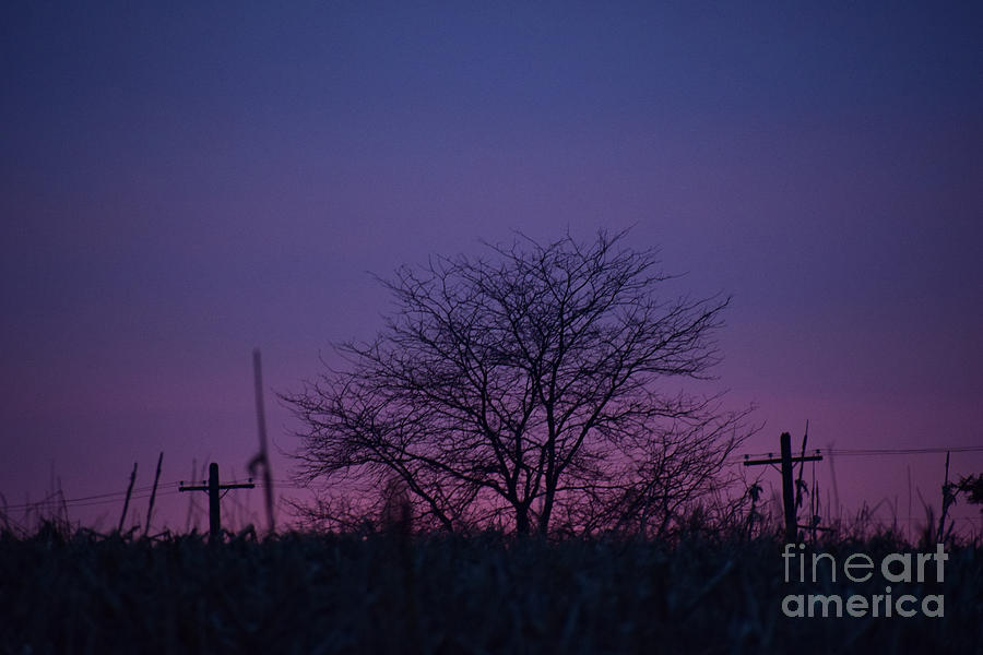 Landscape Photograph - February Sky by Jeff Willoughby