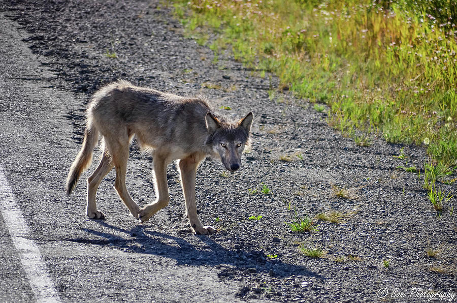 Alaskan Highway Photograph - Feed Me by Soni Macy