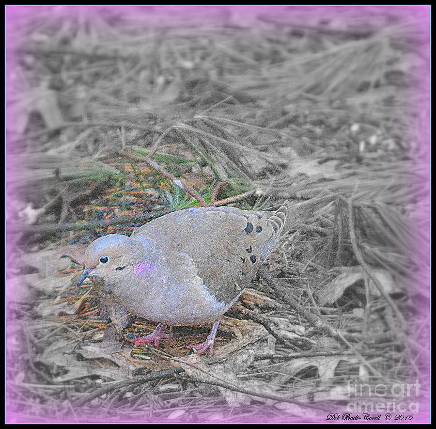 Feeder Photograph - Feeder Friend In Light Fuscia by Deb Badt-Covell