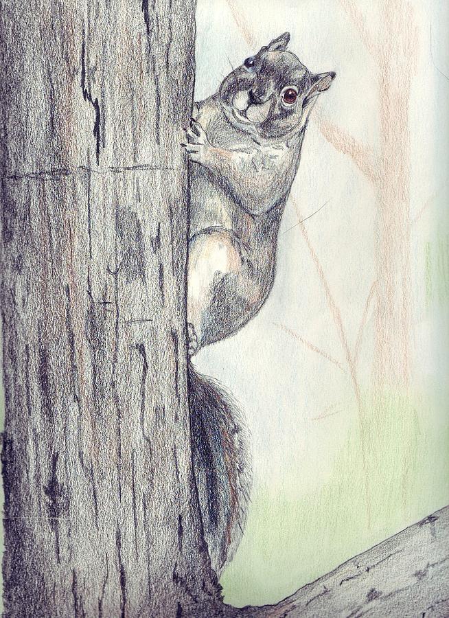 Color Pencil Drawing - Feeder Raider by Debra Sandstrom