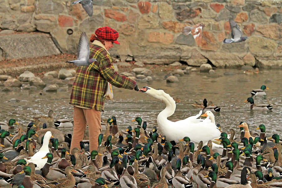 Virginia Lake Photograph - Feeding A Multitude by Donna Kennedy