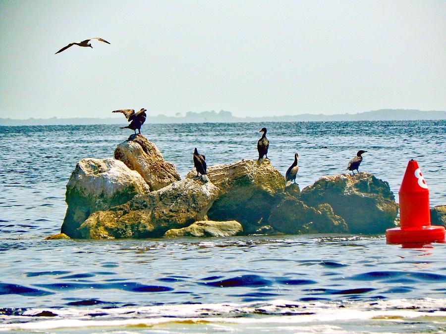 Birds Photograph - Feeding Frenzy by Michelle Colbert