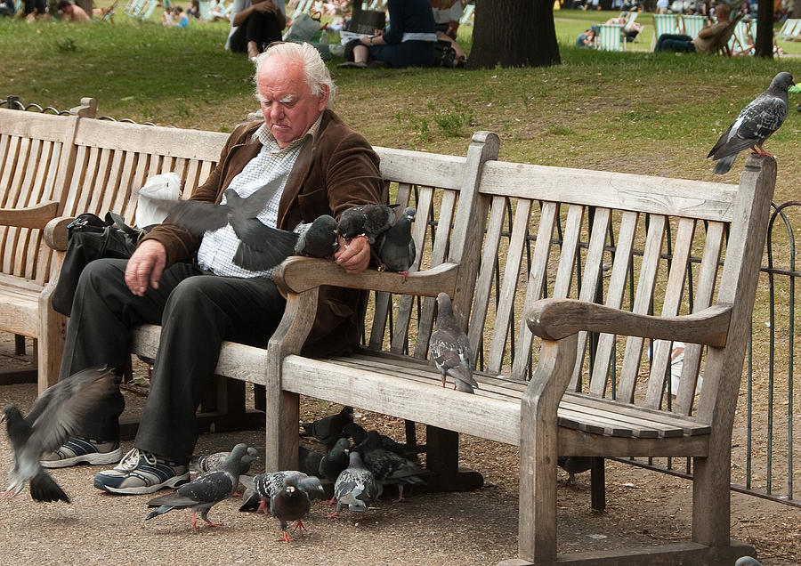 Man Photograph - Feeding Pigeons by Peter Jarvis