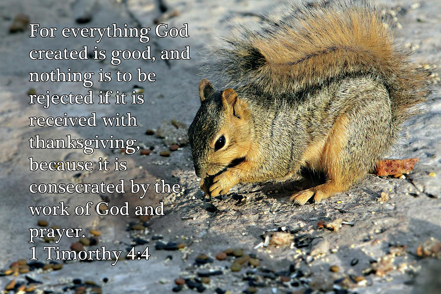 Scripture Photograph - Feeding Squirrel 1timothy 4 V 4 by Linda Phelps