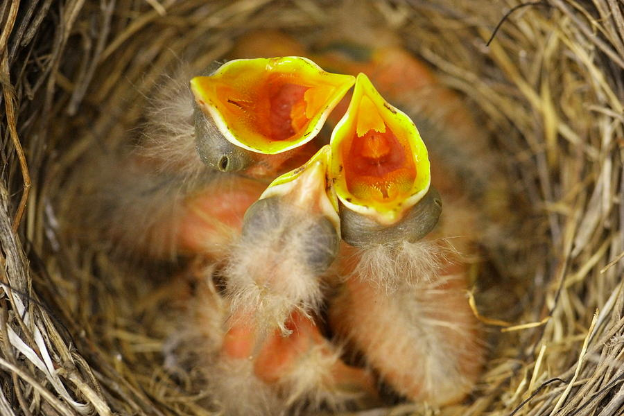 Feeding Time Photograph