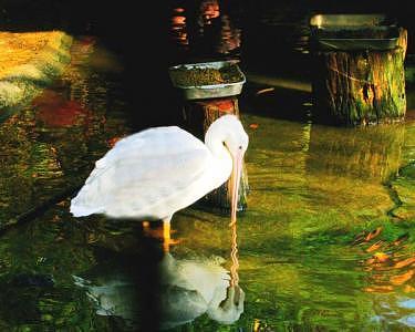 Bird Digital Art - Feeding Time by Marcia Berg Haskell