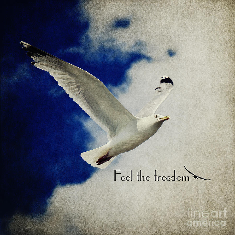 Gull Photograph - Feel The Freedom by Angela Doelling AD DESIGN Photo and PhotoArt