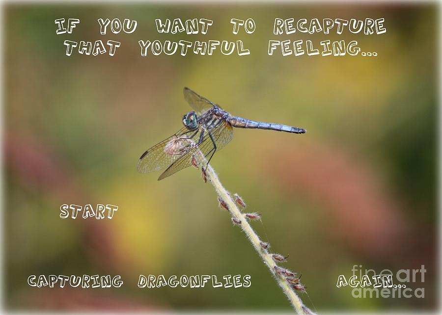 Dragonfly Art Photograph - Feel Young Again by Carol Groenen