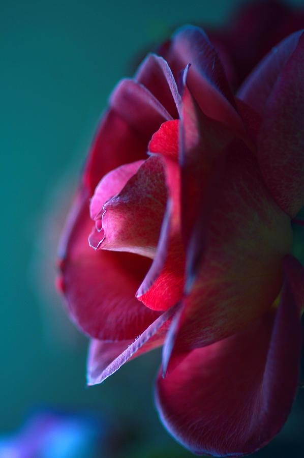 Blue Photograph - Feeling Blue by Mandy Wiltse