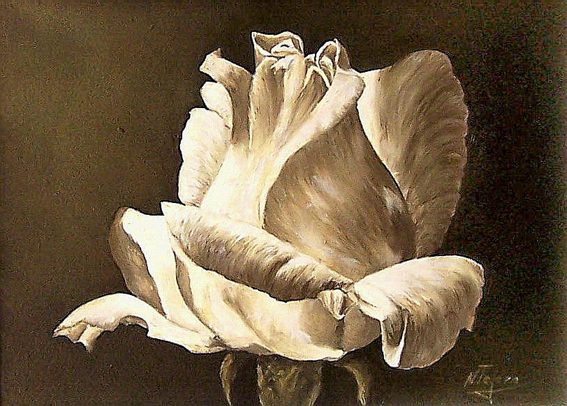 Rose Flower Painting - Feeling The Light  by Natalia Tejera
